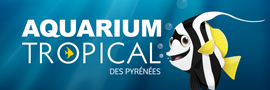 Aquarium Tropical